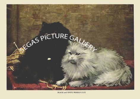 Fine art print of the BLACK and WHITE PERSIAN CATS by Frances Simpson (1903)